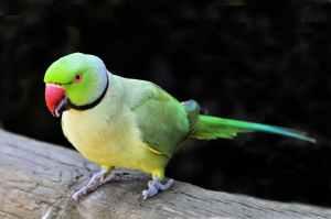 A photo of parrot Bird